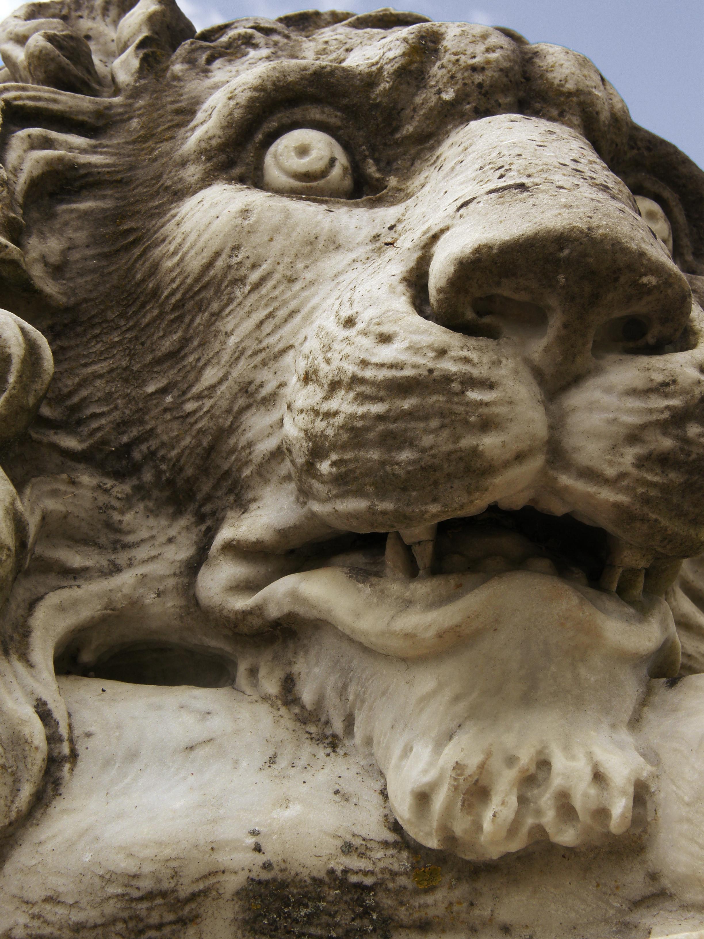 Lion du parc Chavat
